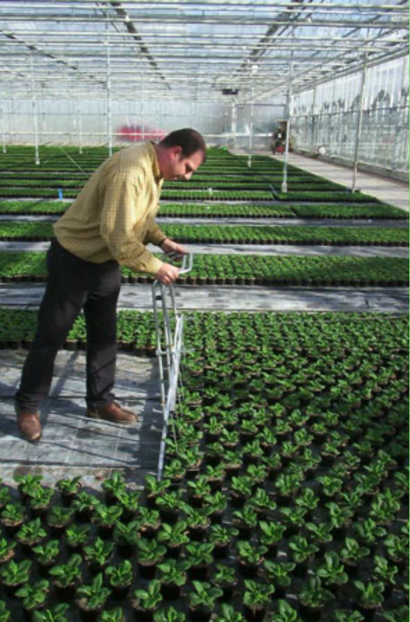 Uitzetten planten